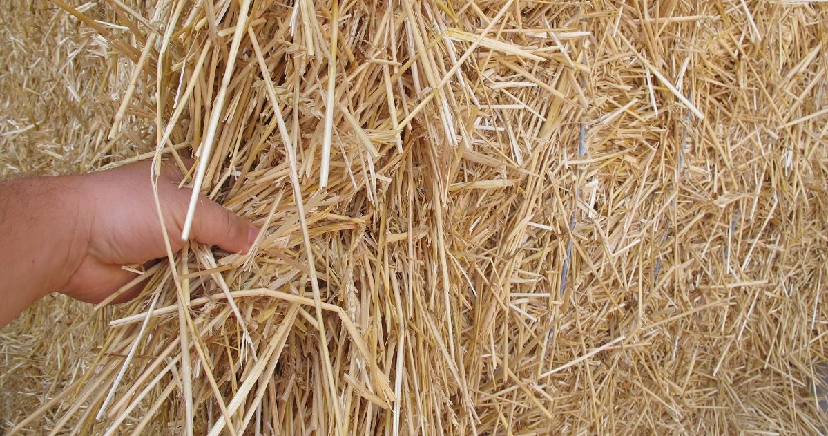 Clutching-Straws